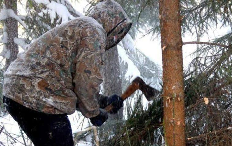 Мужчина рубит дерево