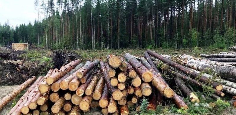 Незаконная порубка леса