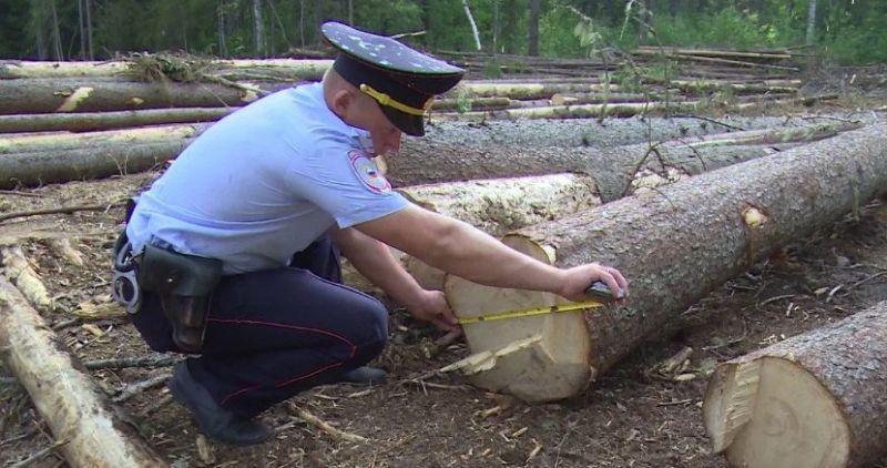 Наказание за вырубку леса